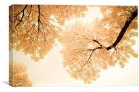 Impressions Of October, Canvas Print