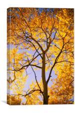 Autumn Glow, Canvas Print