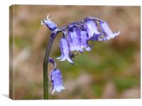 Dusty Bluebell, Canvas Print