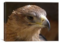 Where Eagles Glare, Canvas Print