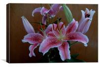 Rubrium Lily, Canvas Print