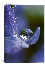 Bluebell Droplet, Canvas Print