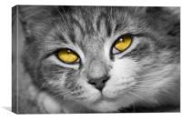 Stunning Eyes, Canvas Print