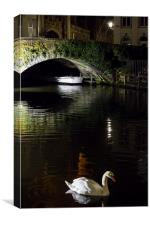Swan In Bruges, Canvas Print