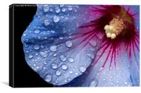 Rain On A Hibiscus, Canvas Print