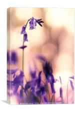 Bluebell At Sunset, Canvas Print