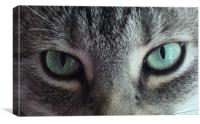 Cats Eyes, Canvas Print
