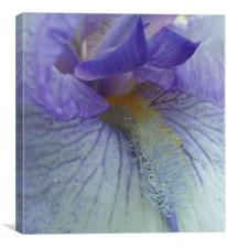 Inside an Iris, Canvas Print