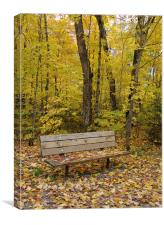 Forest bench, Canvas Print