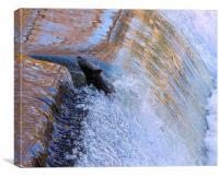 Salmon determination, Canvas Print