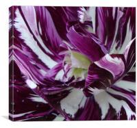Painted tulip, Canvas Print