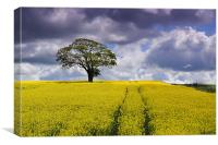 Tree in a field 1, Canvas Print