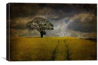 Tree in a field 2, Canvas Print