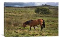 Wild Pony, Canvas Print