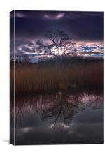 Tree Reflection                                   , Canvas Print