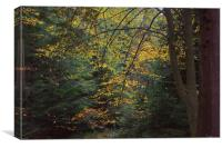 Autumn 1                                  , Canvas Print