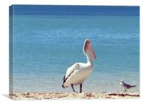 Pelican Stand-off, Canvas Print