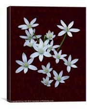 White Rain Lilies on Burnt Cherry, Canvas Print