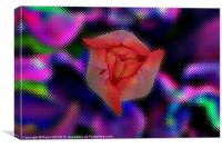 Red Tulip Bud on Stylized, Canvas Print