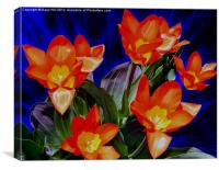 Seven Red and Yellow Tulips, Canvas Print