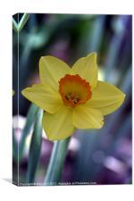 Yellow Daffodil on Metallic, Canvas Print
