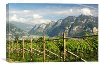 The Vineyards of Trentino