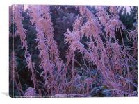 Frosty Pink, Canvas Print