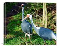 Breeding Pair Of Cranes, Canvas Print