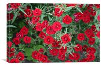 Multitude of red, Canvas Print