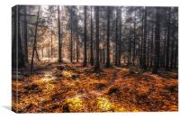 New Forest Autumn