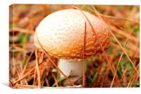 Mushroom, Canvas Print