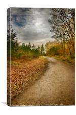 Wyre Forest, Worcestershire, Canvas Print