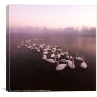 Swan Lake, Canvas Print