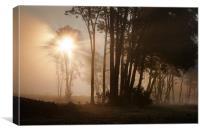 Morning Glory, Canvas Print