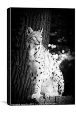 Lynx, Canvas Print