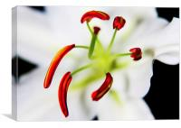 Closeup Flower Stamen Macro, Canvas Print
