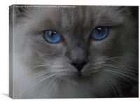 Blue Eyes, Canvas Print