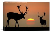 Sunset Stags, Canvas Print