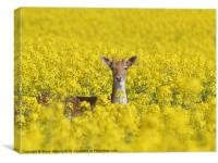 Fallow in Yellow, Canvas Print