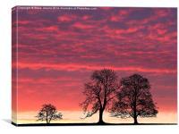 Daybreak, Canvas Print