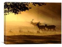Golden Glow, Canvas Print