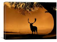 Fallow buck Silhouette, Canvas Print