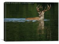 Deer Dip, Canvas Print