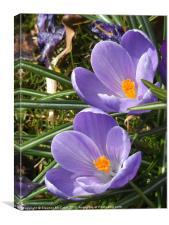 Sweet Sweet Spring, Canvas Print