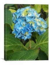 Seasonal Blue!, Canvas Print