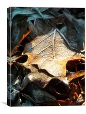 Crispy Winter Leaves!, Canvas Print
