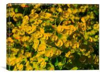 Summer Green Sweetness, Canvas Print