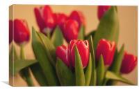 Tulip Soft Focus, Canvas Print