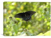 Brilliant Butterfly, Canvas Print