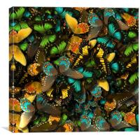 Butterflies, Canvas Print